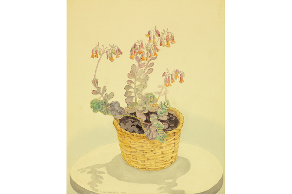 Untitled (Potted plant)