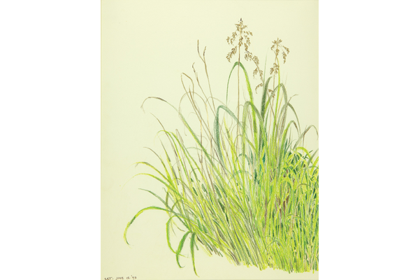 Untitled (Sea oats and grasses)