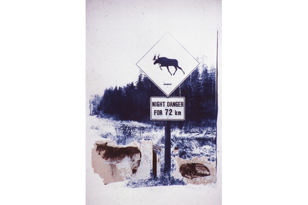 Wolves in the City: Night Danger, Northern Ontario