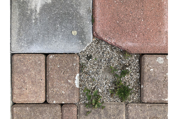 Susan Gold,Ground Cover, 2021,infused photo on aluminum,27 x 43 cm